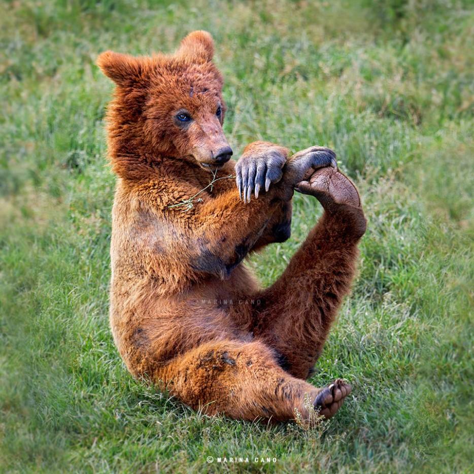 медвежонок сидит в траве
