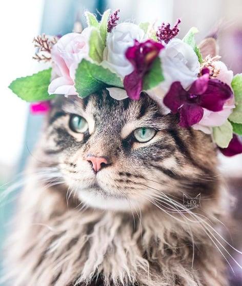 кошки, кошки фото, кошки красивые фото рис 12