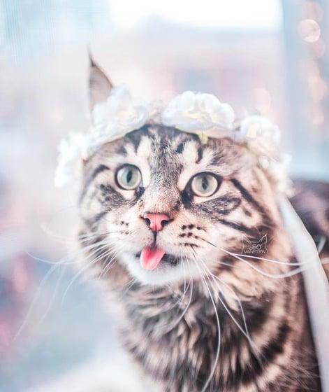 кошки, кошки фото, кошки красивые фото рис 13