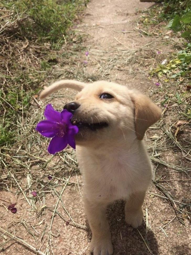 щенок с цветком в зубах