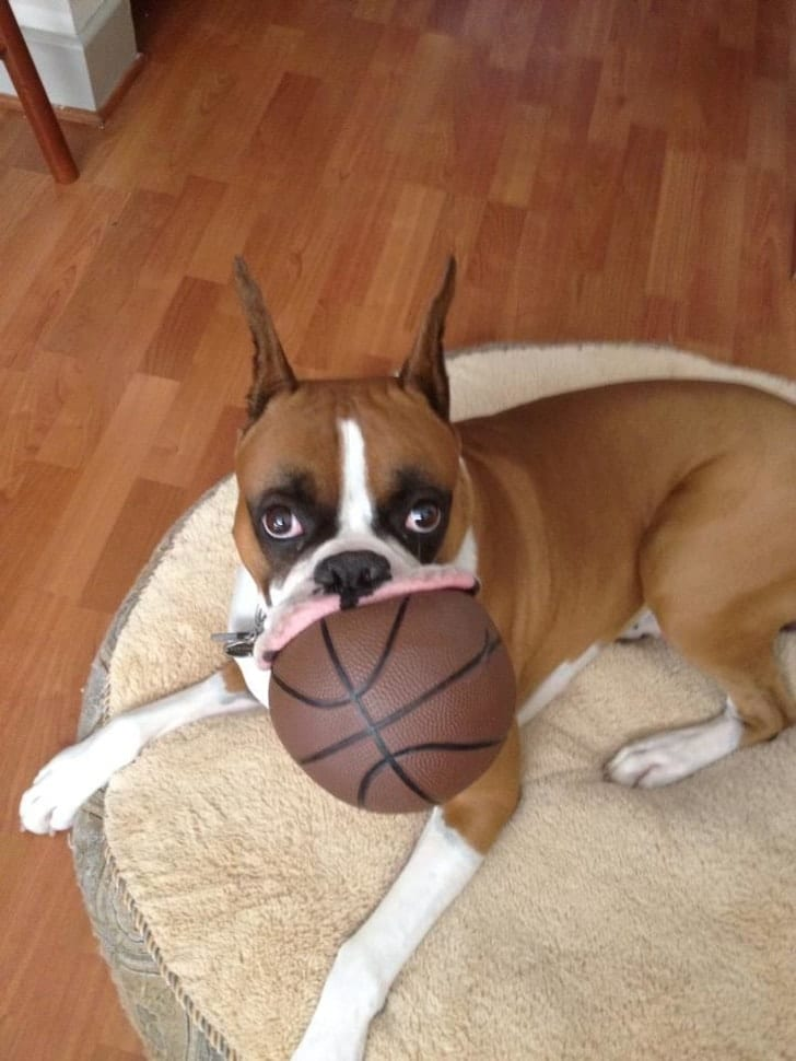 собака с мячом в зубах