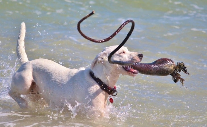 собака в воде