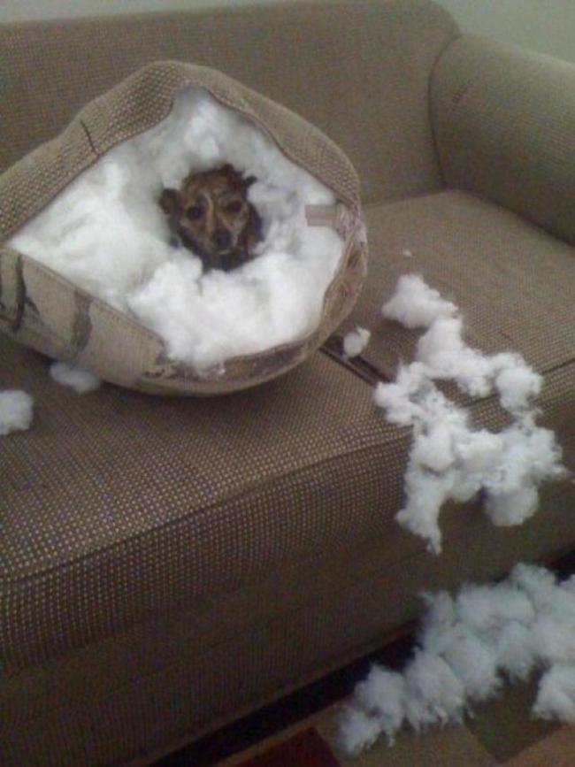 собака в подушке