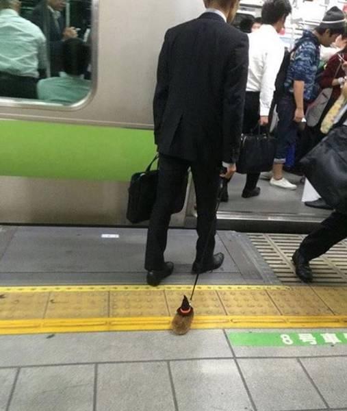 мужчина с ежиком на поводке в метро