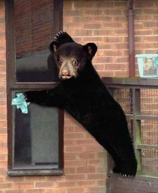 медвежонок с тряпкой в лапе