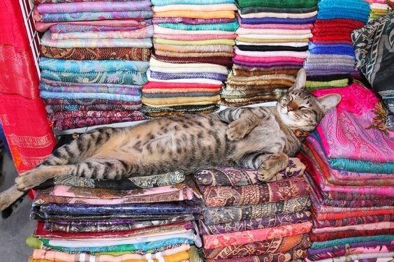 кот спит на вещах
