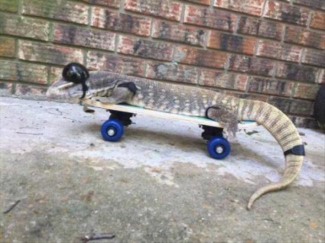 варан на скейтборде