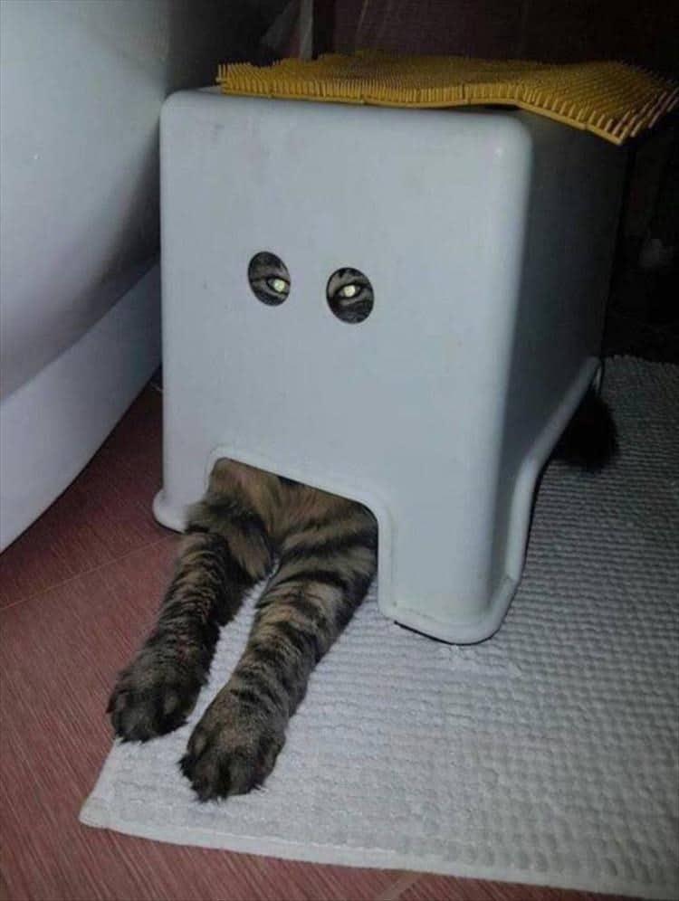 кот под коробкой