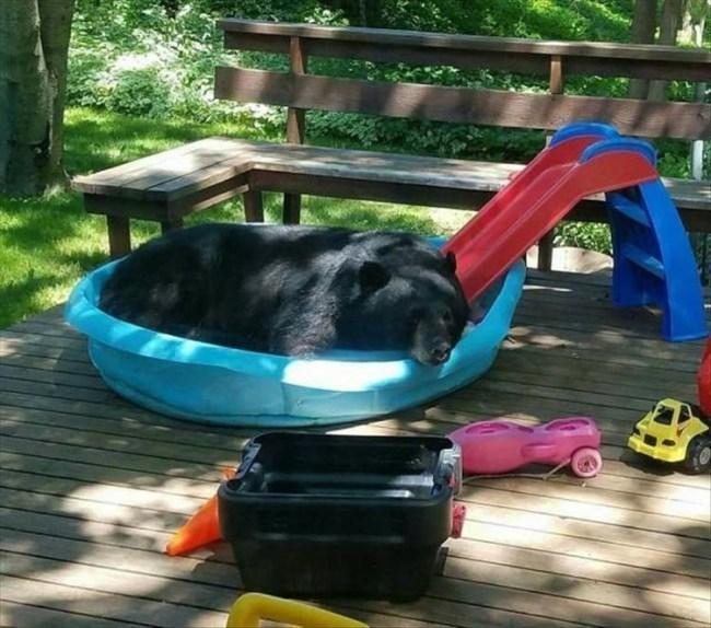 медведь в детском бассейне