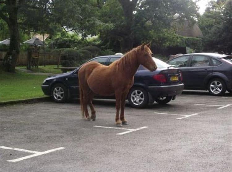 лошадь на парковке