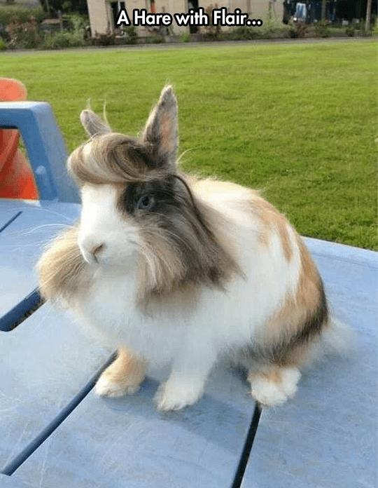 заяц с челкой