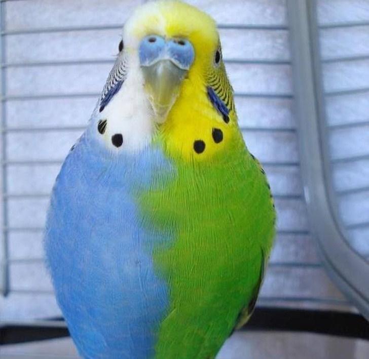 сине-зеленый попугай