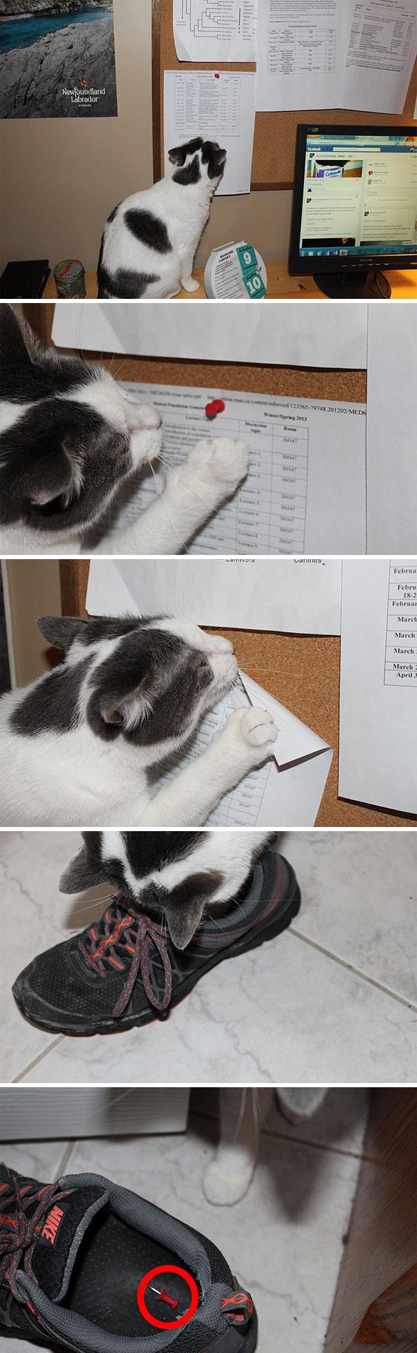 кот вынимает кнопку из стены