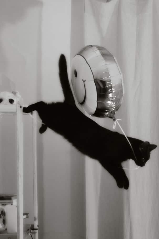 черный кот с воздушным шаром