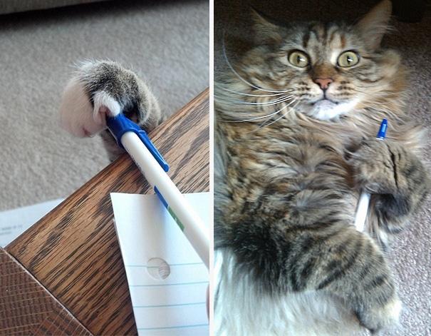кот с ручкой