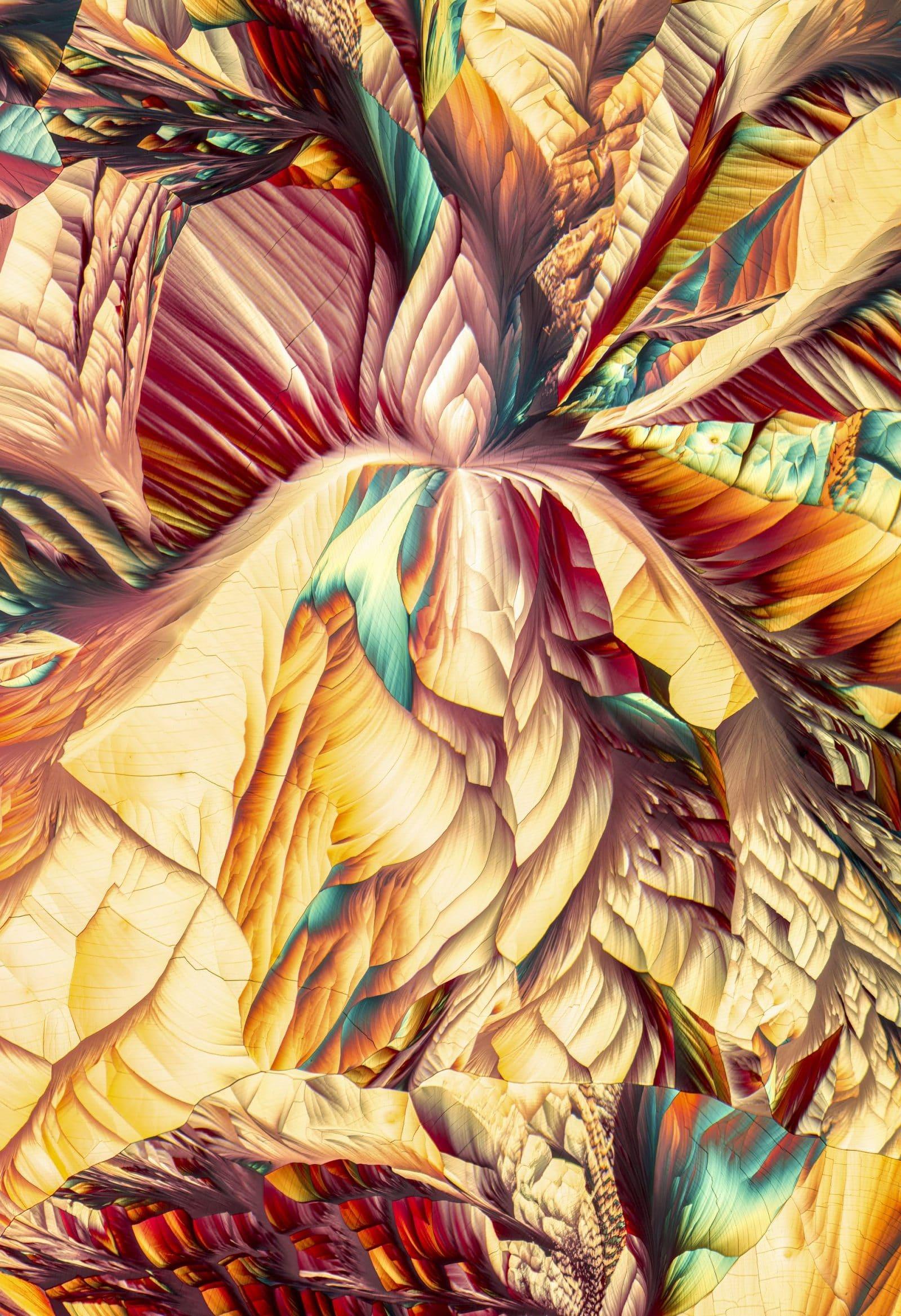 макрофотография конкурс рис 2