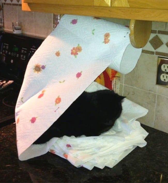 черный кот спит на бумажном полотенце