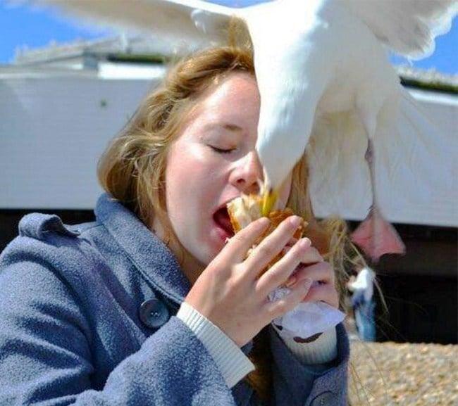 чайка отнимает еду у девушки