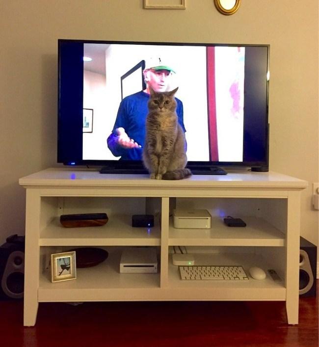 кот сидит перед телевизором