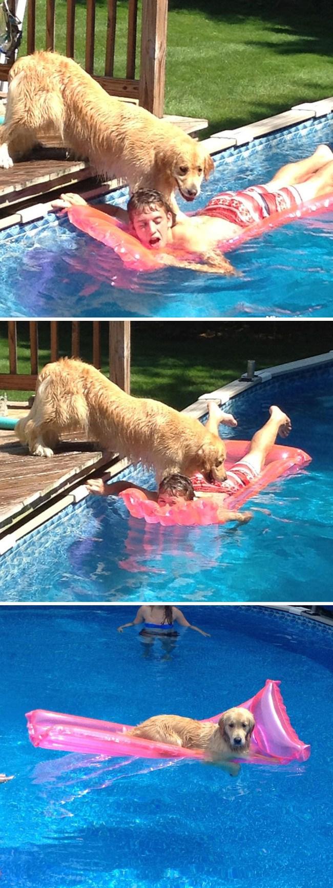 собака на надувном матрасе в бассейне
