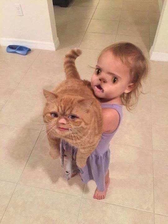 маленькая девочка держит рыжего кота
