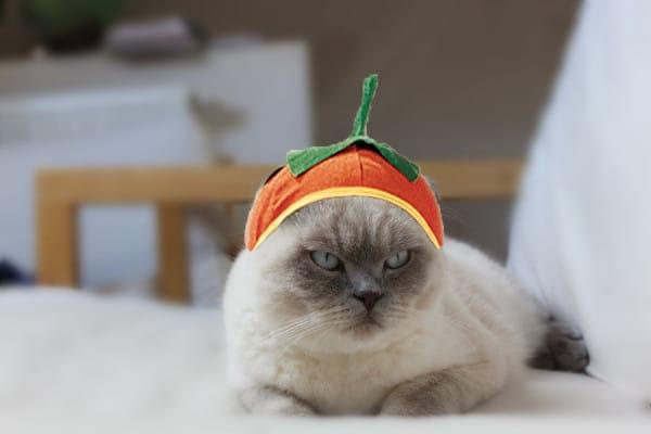 кот в шапке в форме тыквы