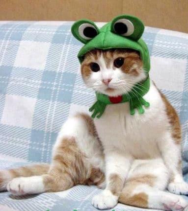 рыже-белый кот в шапке лягушке