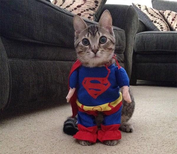 кот в костюме супермена