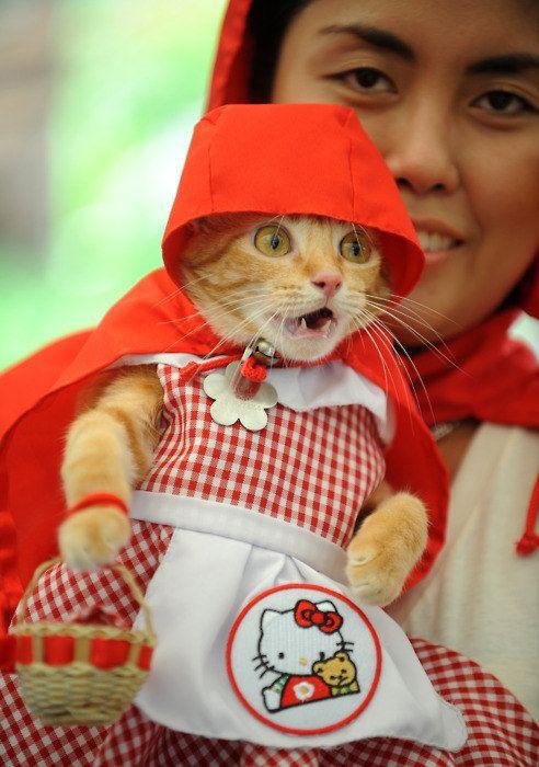 рыжая кошка в костюме красной шапочки