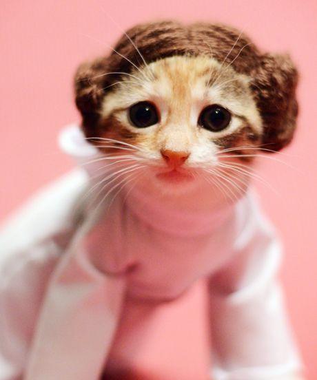 кошка в костюме принцессы леи