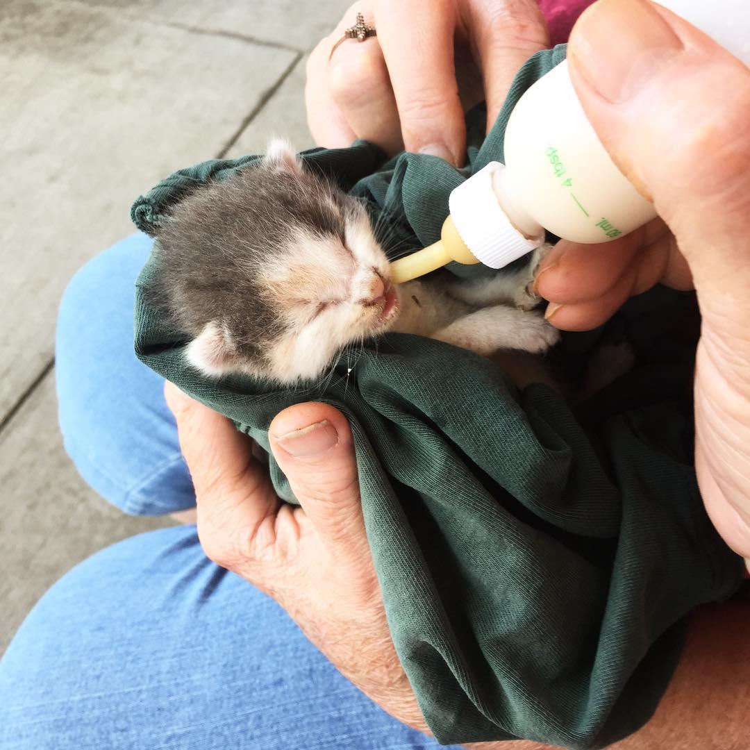фото котят, котята, котят кормят молоком рис 3