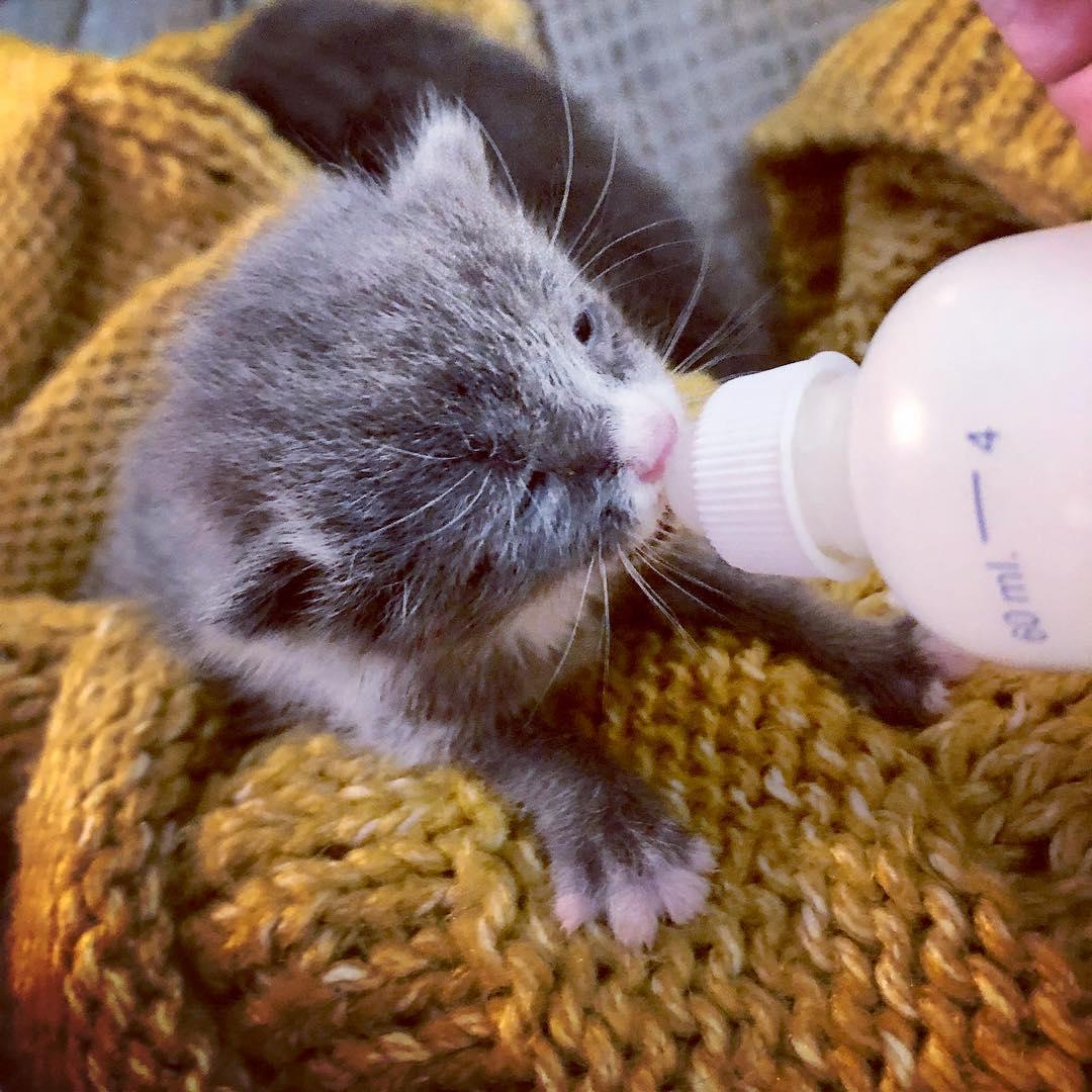 фото котят, котята, котят кормят молоком рис 6