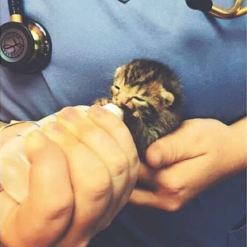 фото котят, котята, котят кормят молоком рис 8