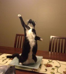черный кот стоит на задних лапах
