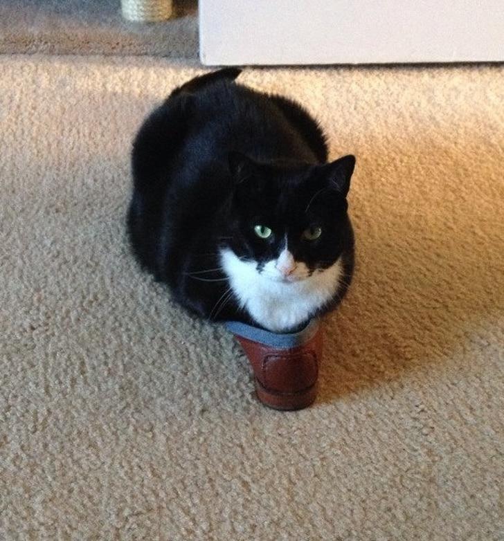 толстый кот рис 2