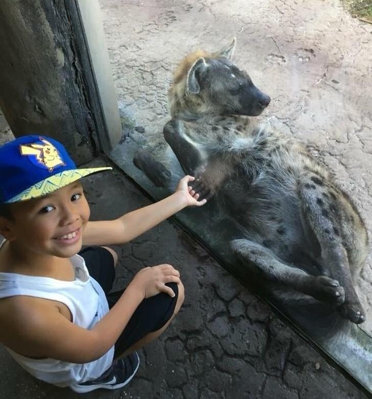 гиена в зоопарке