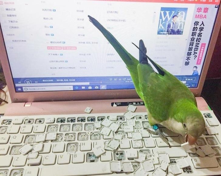попугай и компьютер