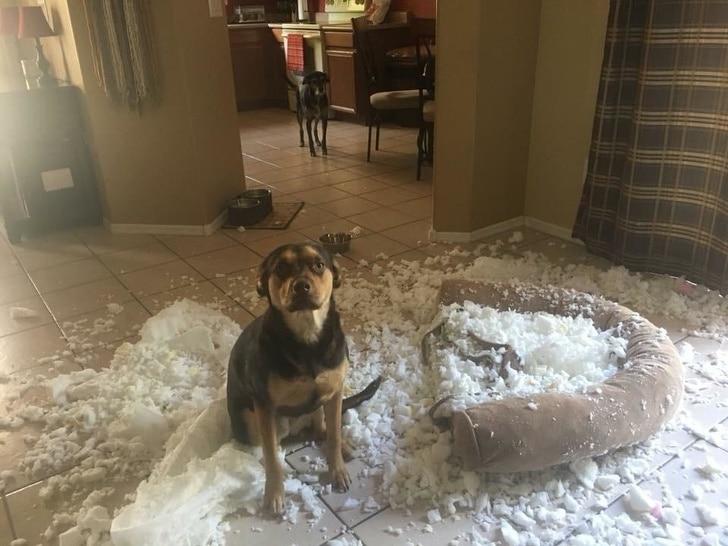 непослушный пёс