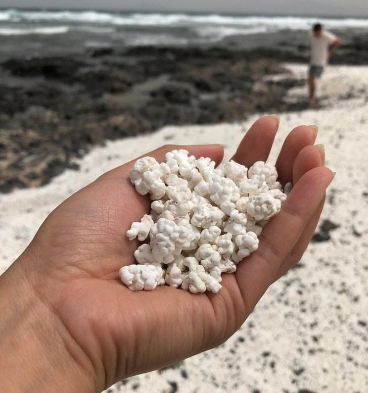 белый коралл