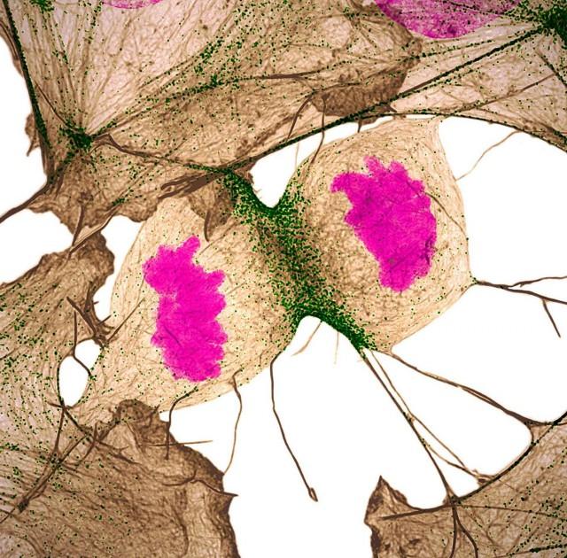 макрофотография конкурс рис 8