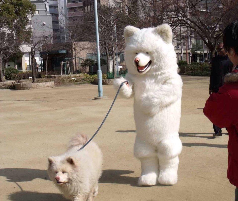 человек в костюме собаки выгуливает собаку