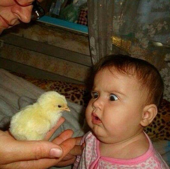 девочка смотрит на цыпленка