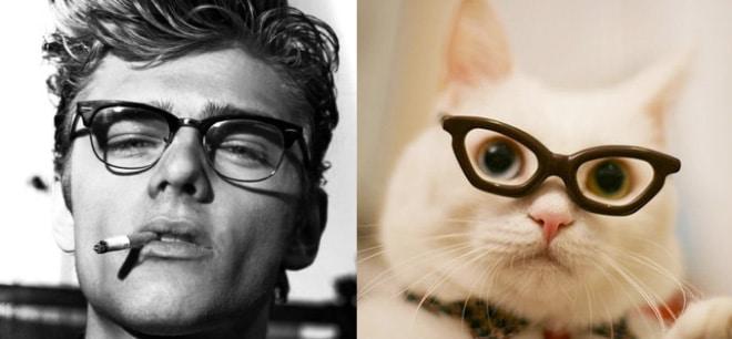 парень и кот в очках
