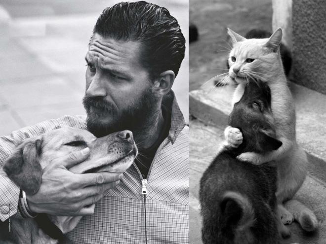 том харди с собакой и кот со щенком