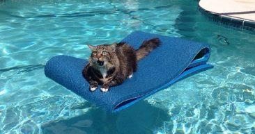 кот плывет на коврике в бассейне