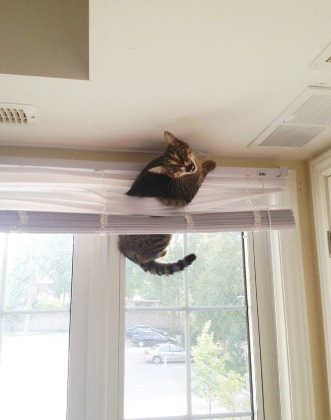 кот застрял в жалюзи