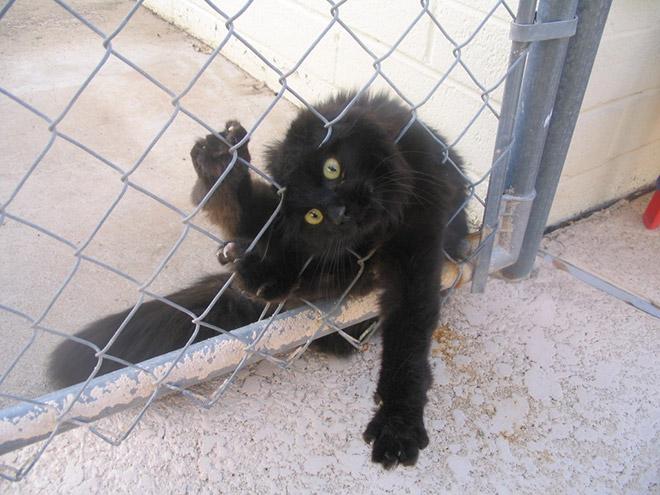 черный кот застрял в заборе