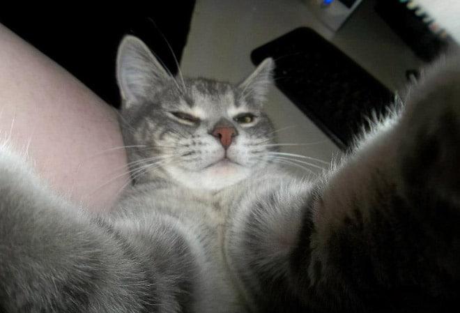 смешное селфи кота