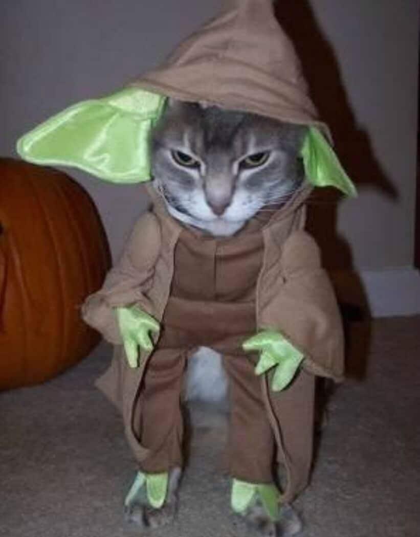кот в костюме мастера йоды