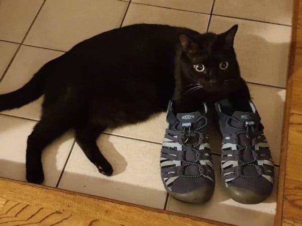 черный кот с лапами в кроссовках